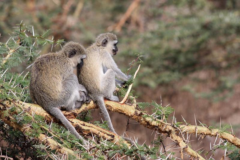 ンゴロンゴロ保全地域の画像 p1_21