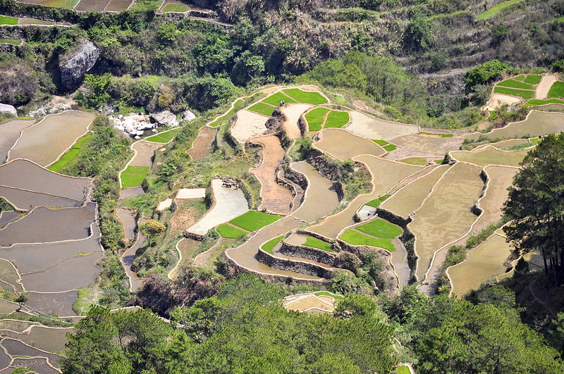 フィリピン・コルディリェーラの棚田群の画像 p1_27