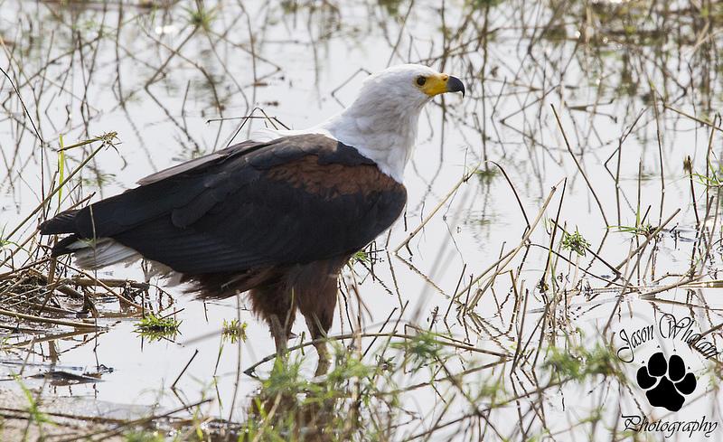 マラウイ湖国立公園の画像 p1_26