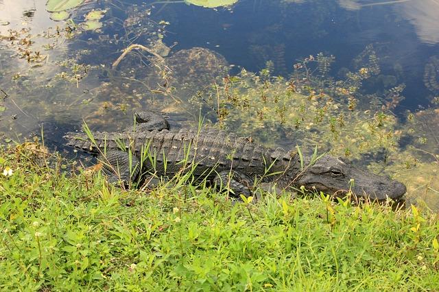 エヴァーグレーズ国立公園の画像8