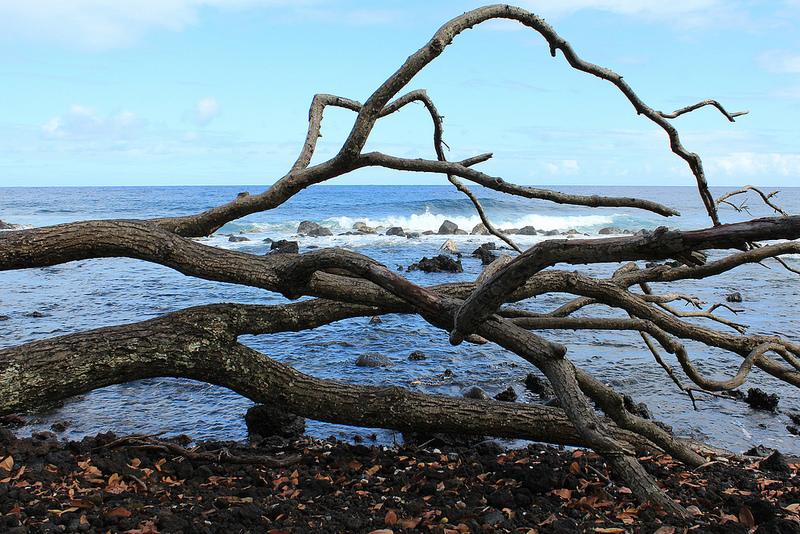 ハワイ火山国立公園の画像26