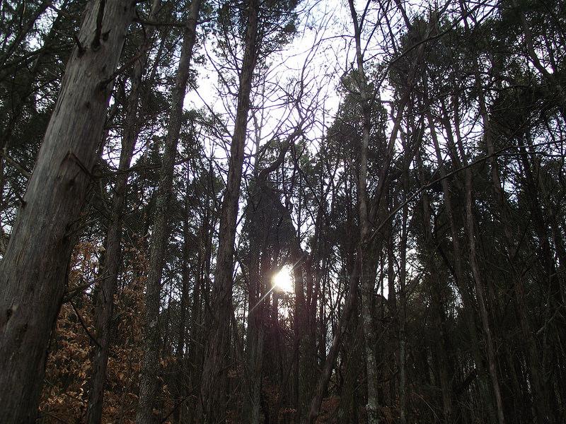 マンモス・ケーヴ国立公園の画像9