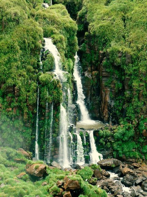 イグアス国立公園の画像10