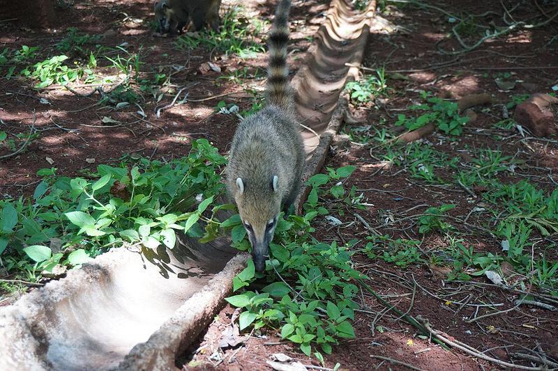 イグアス国立公園の画像11