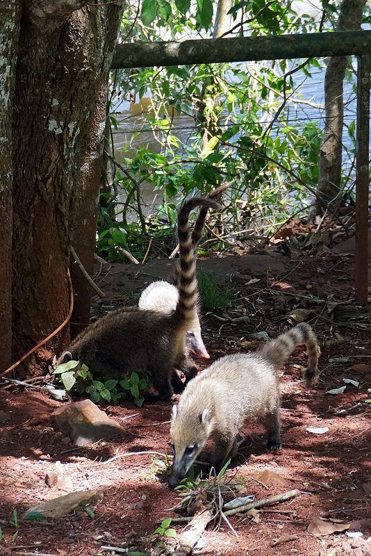 イグアス国立公園の画像12