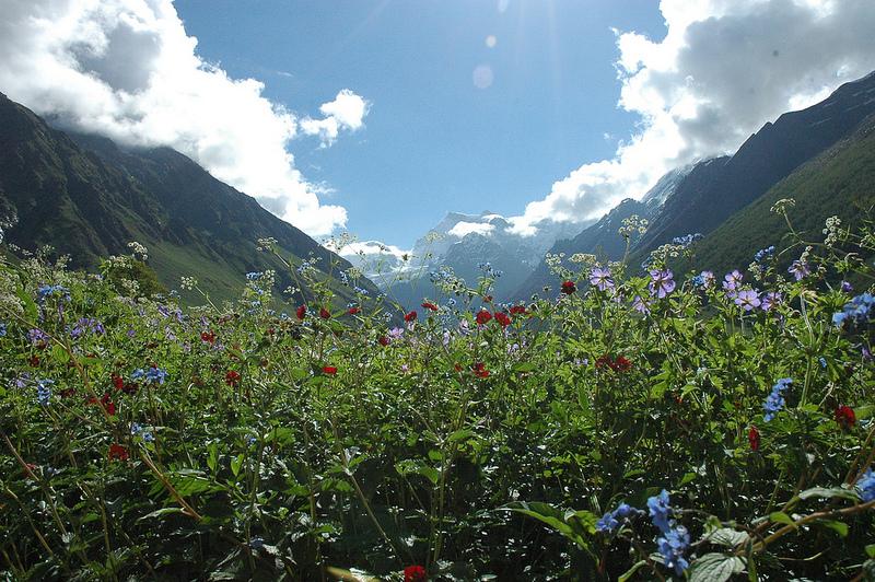 ナンダ・デヴィ国立公園及び花の谷国立公園の画像1