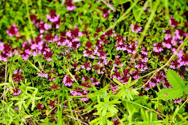 ナンダ・デヴィ国立公園及び花の谷国立公園の画像8