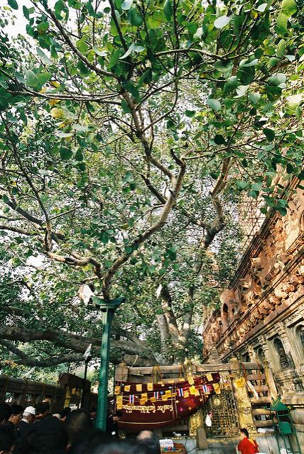 ブッダガヤの大菩提寺の画像17