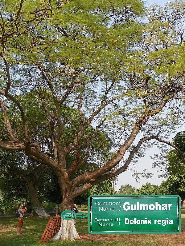 ビハール州ナーランダ・マハーヴィハーラの遺跡の画像4