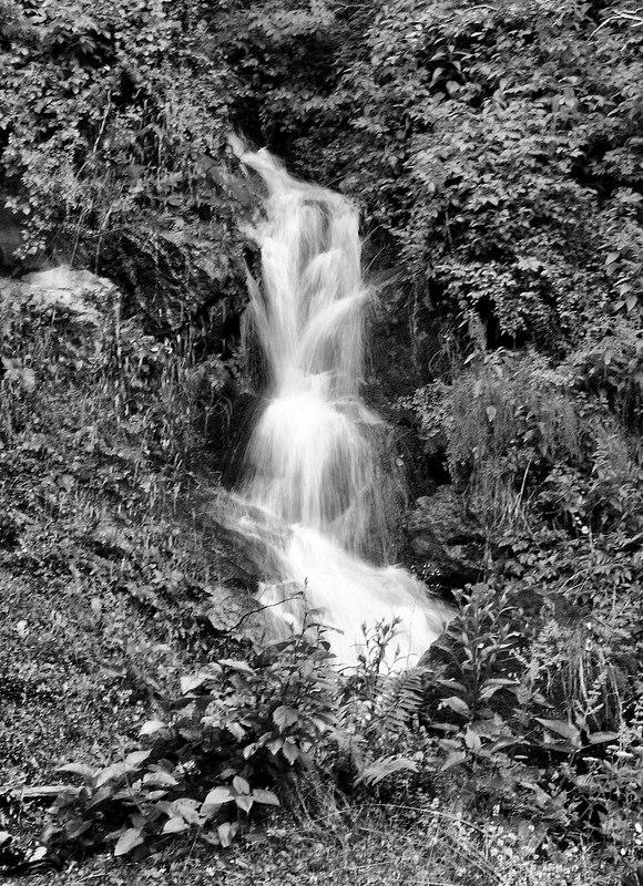 カルパチア山地と他ヨーロッパのブナ原生林の画像3