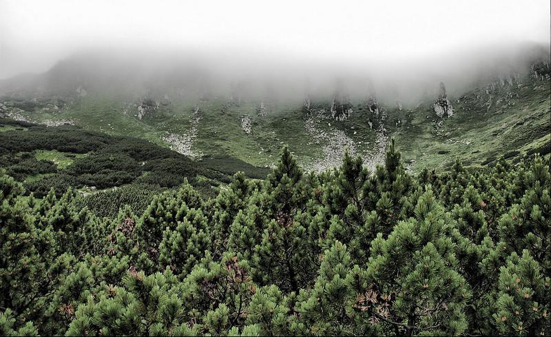 カルパチア山地と他ヨーロッパのブナ原生林の画像5