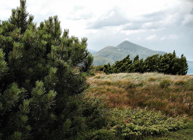 カルパチア山地と他ヨーロッパのブナ原生林の画像6
