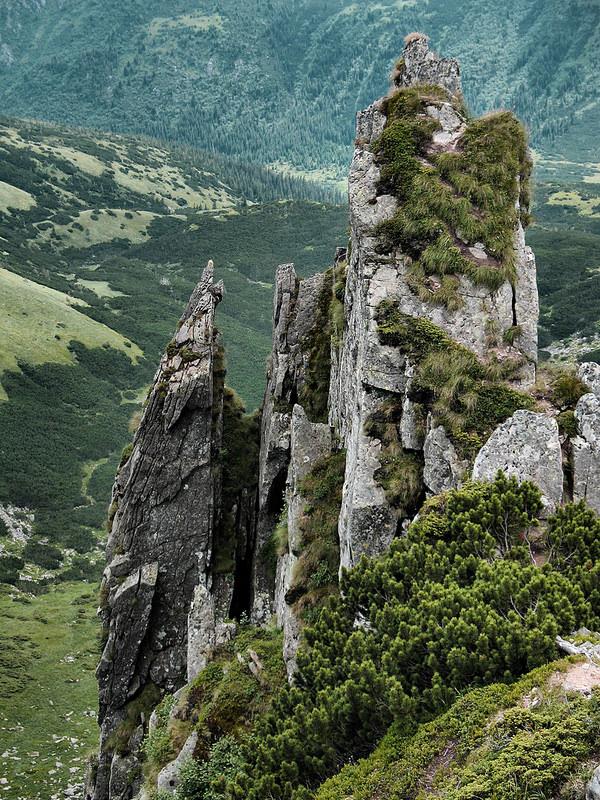 カルパチア山地と他ヨーロッパのブナ原生林の画像9