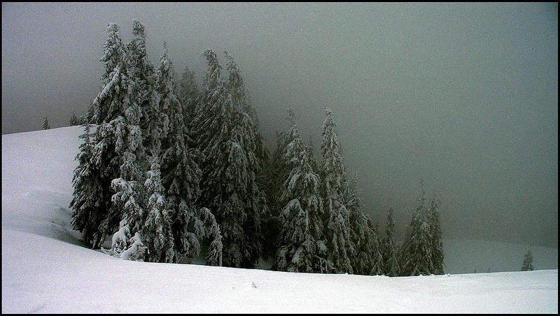カルパチア山地と他ヨーロッパのブナ原生林の画像12