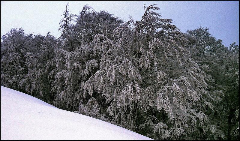カルパチア山地と他ヨーロッパのブナ原生林の画像13