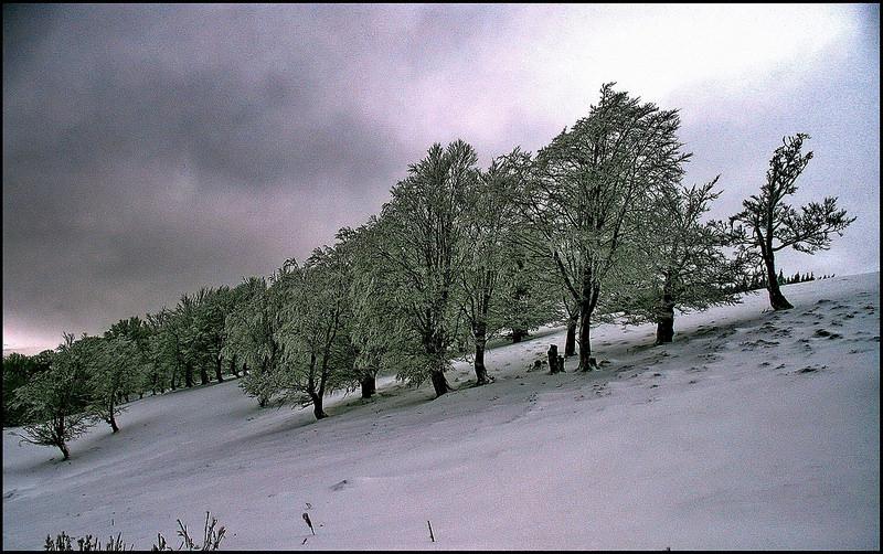 カルパチア山地と他ヨーロッパのブナ原生林の画像14