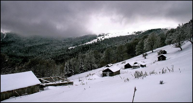 カルパチア山地と他ヨーロッパのブナ原生林の画像16