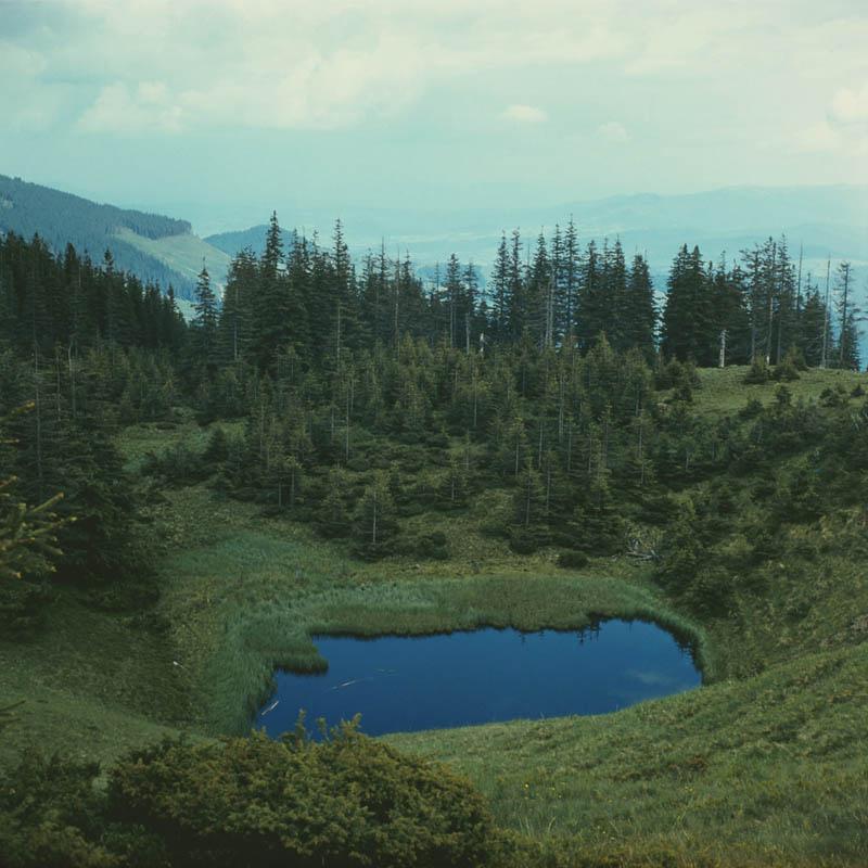 カルパチア山地と他ヨーロッパのブナ原生林の画像19