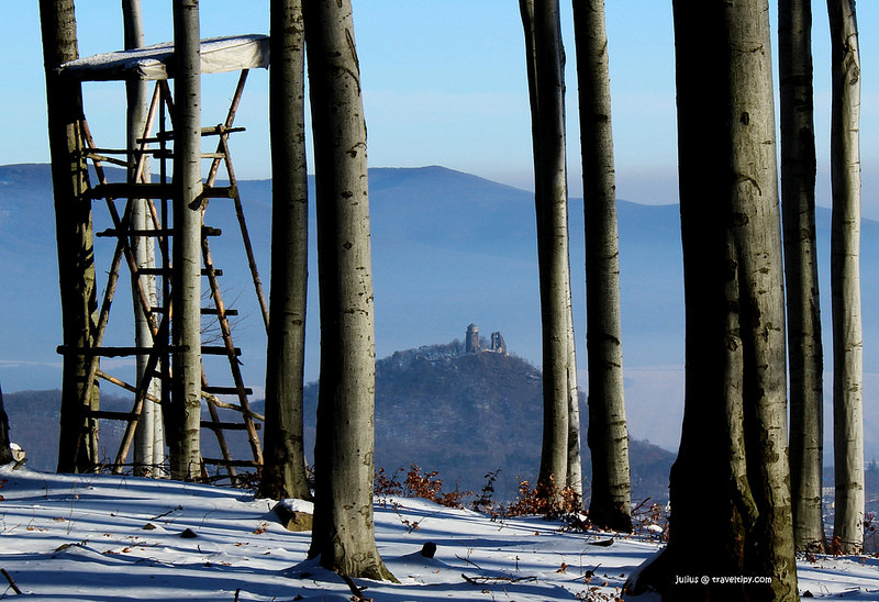 カルパチア山地と他ヨーロッパのブナ原生林の画像20
