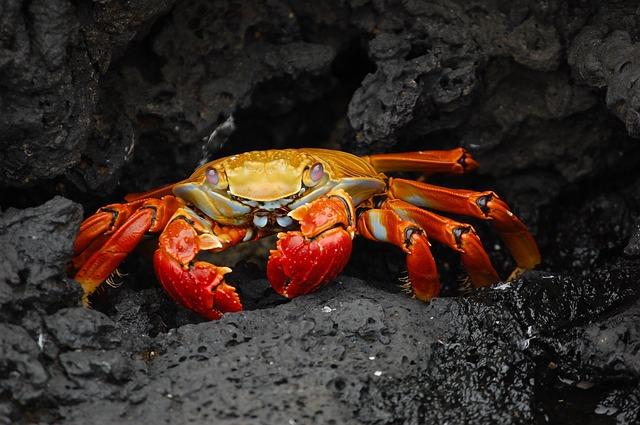 ガラパゴス諸島の画像3