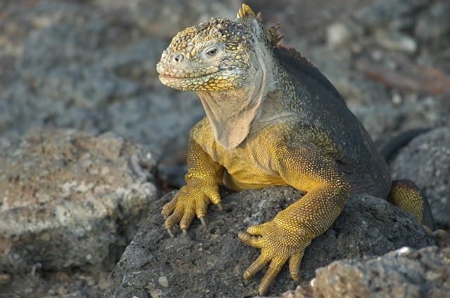 ガラパゴス諸島の画像4