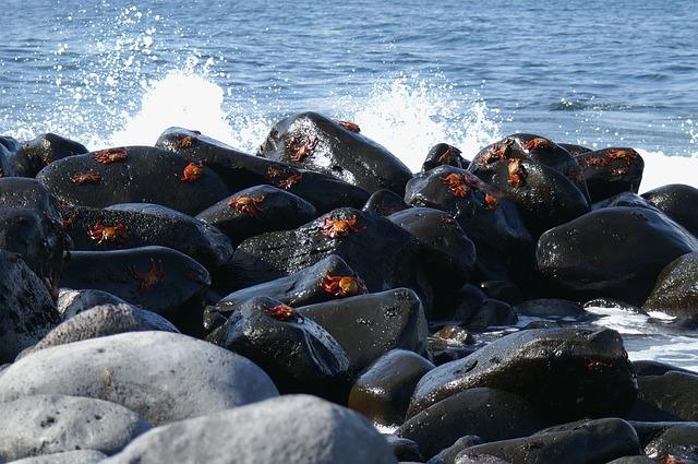 ガラパゴス諸島の画像7