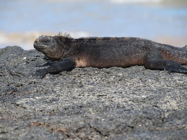 ガラパゴス諸島の画像12