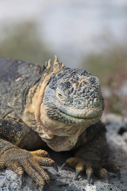 ガラパゴス諸島の画像13