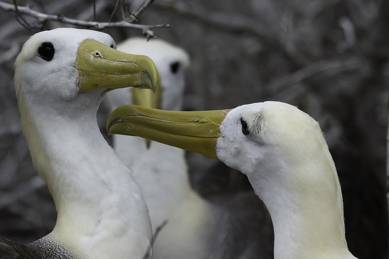 ガラパゴス諸島の画像22