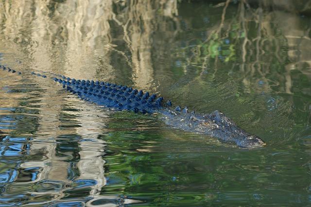 カカドゥ国立公園の画像3