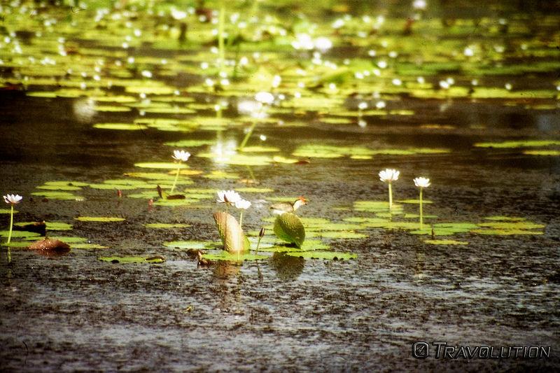 カカドゥ国立公園の画像5