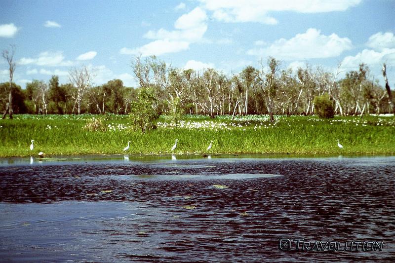 カカドゥ国立公園の画像12