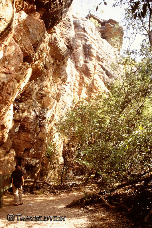 カカドゥ国立公園の画像18