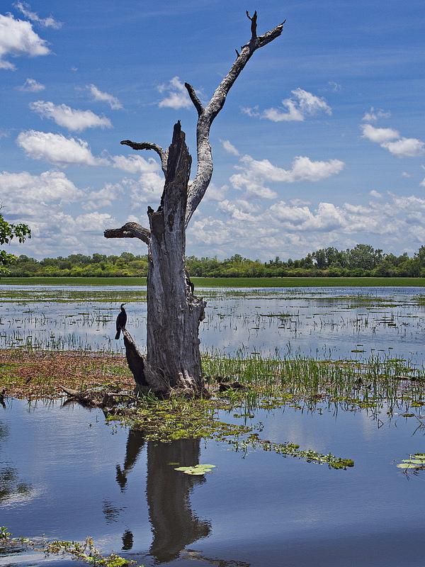 カカドゥ国立公園の画像21