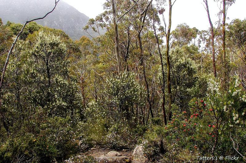 タスマニア原生地域の画像1