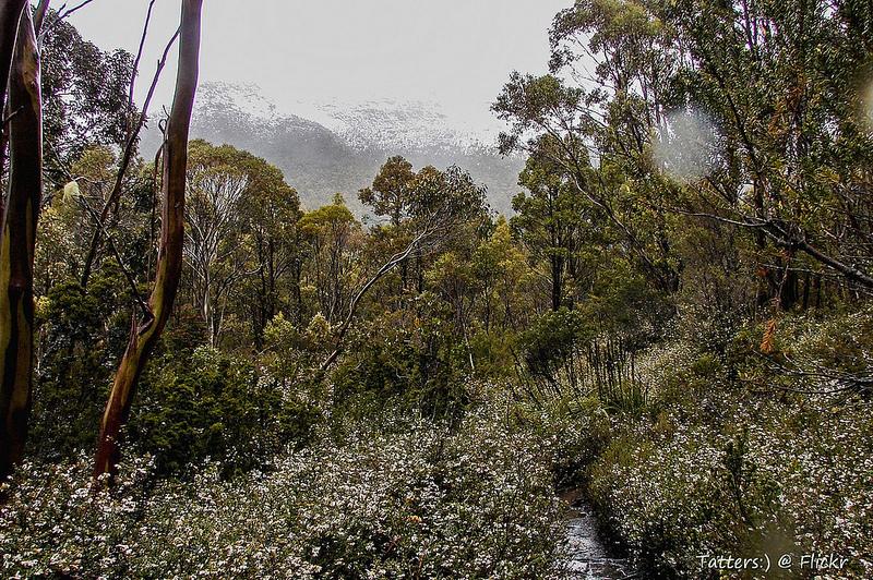 タスマニア原生地域の画像6