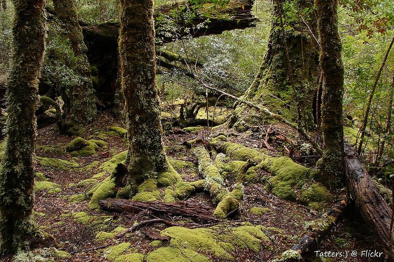 タスマニア原生地域の画像7