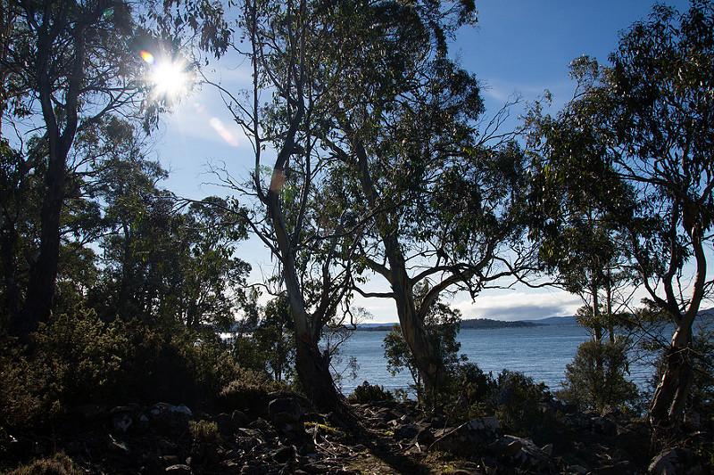 タスマニア原生地域の画像8