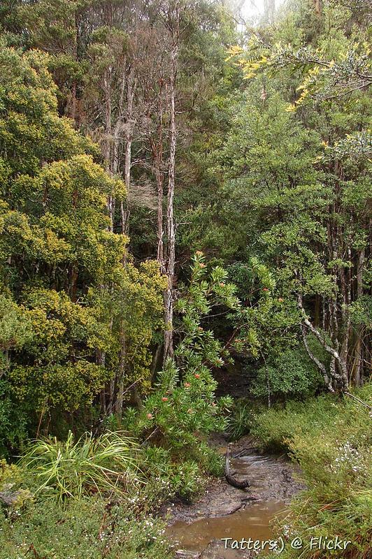 タスマニア原生地域の画像17