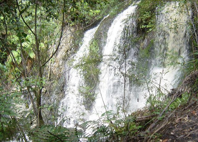 タスマニア原生地域の画像11