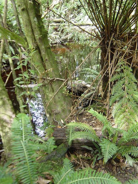 タスマニア原生地域の画像16