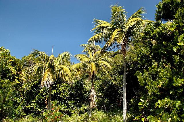 ロード・ハウ諸島の画像4
