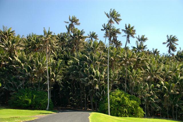 ロード・ハウ諸島の画像1