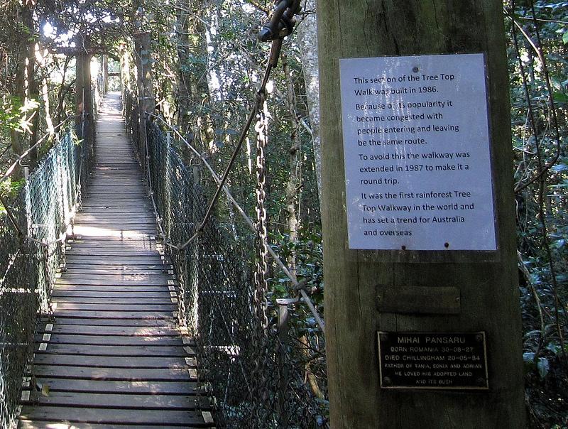 オーストラリアのゴンドワナ雨林の画像2