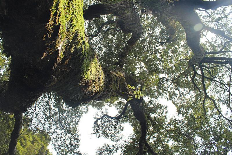 オーストラリアのゴンドワナ雨林の画像6
