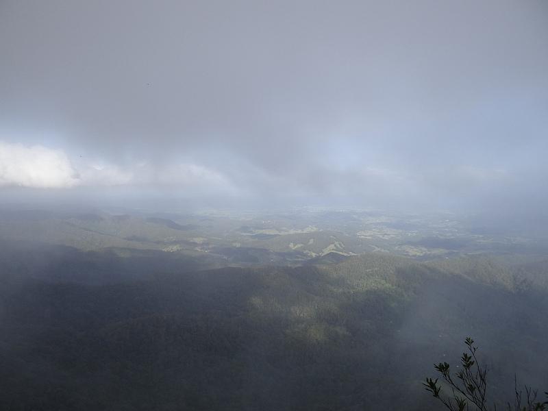 オーストラリアのゴンドワナ雨林の画像7