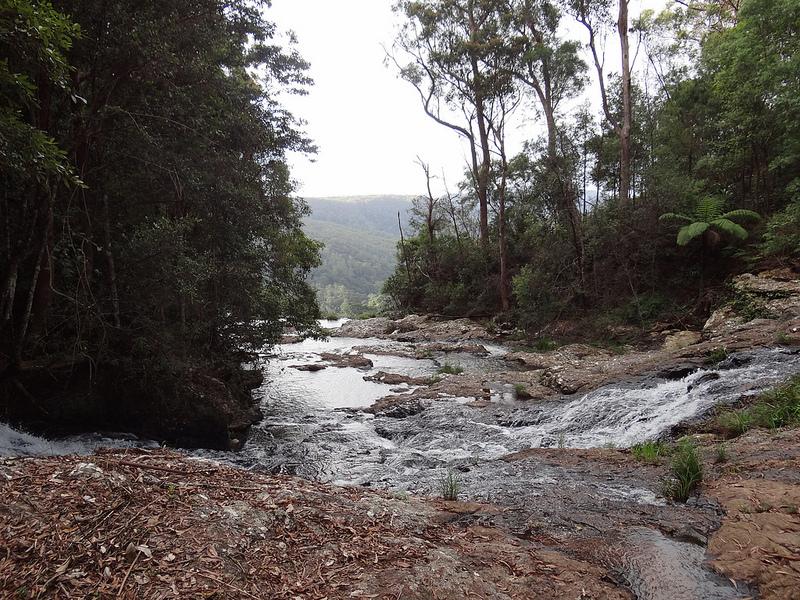 オーストラリアのゴンドワナ雨林の画像8