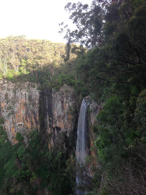 オーストラリアのゴンドワナ雨林の画像9