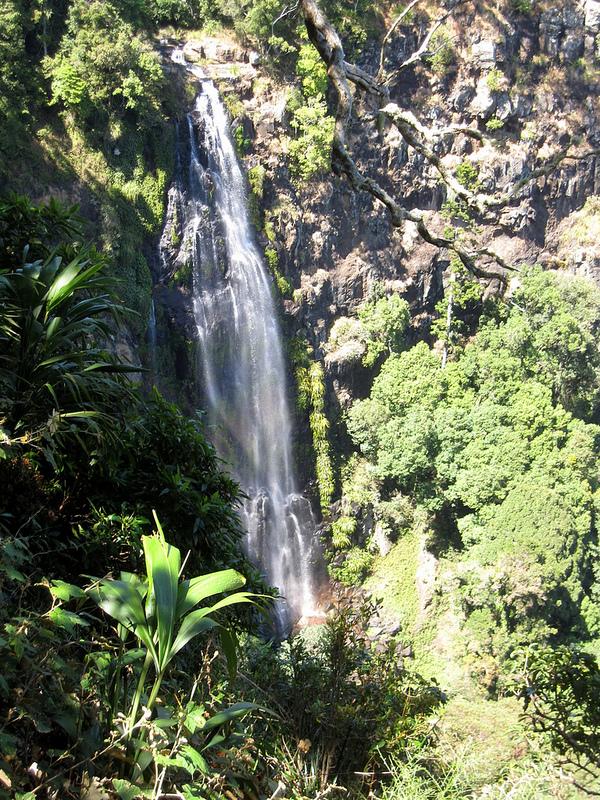 オーストラリアのゴンドワナ雨林の画像11