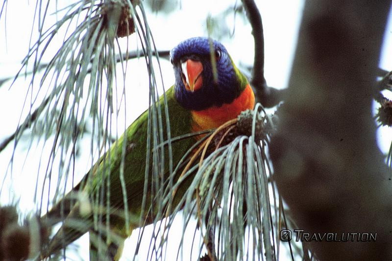 オーストラリアのゴンドワナ雨林の画像14